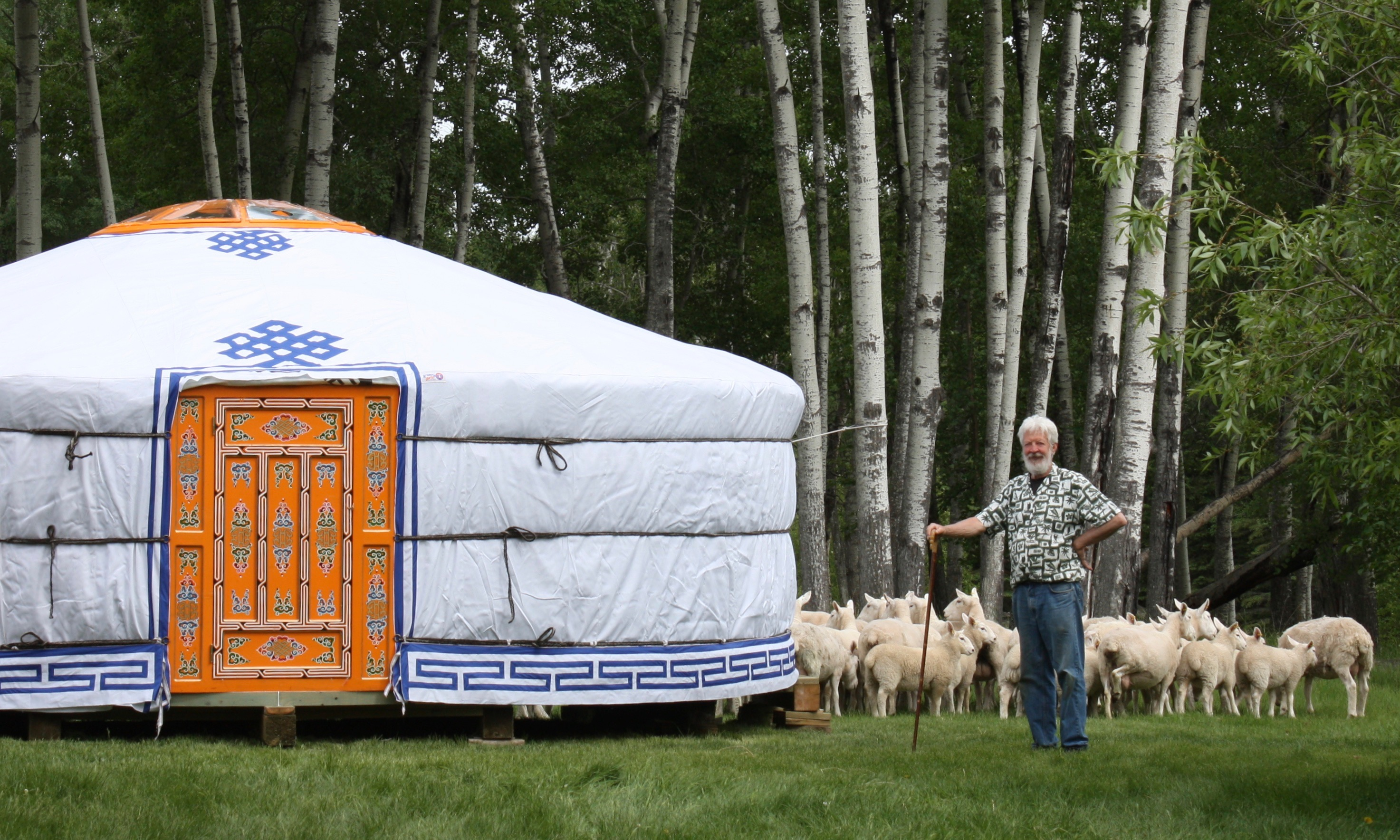 Man with sheep in front of his Yurt