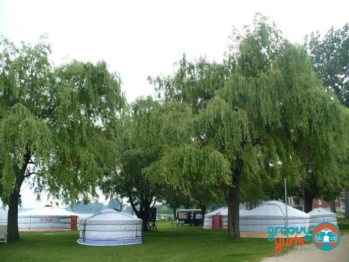 Yurts in a park with tall trees