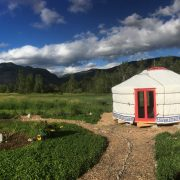 Super Ger Groovy Yurt in the BC countryside