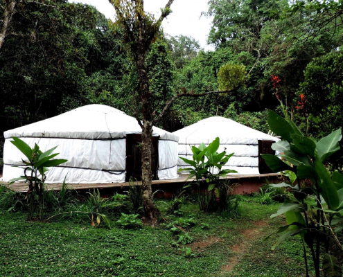 2 white yurts set up in a tropical rainforest